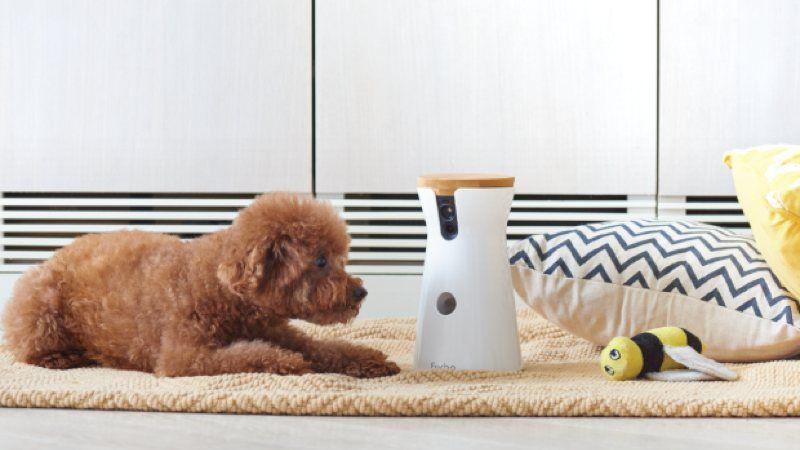camara para perros furbo-oferta amazon