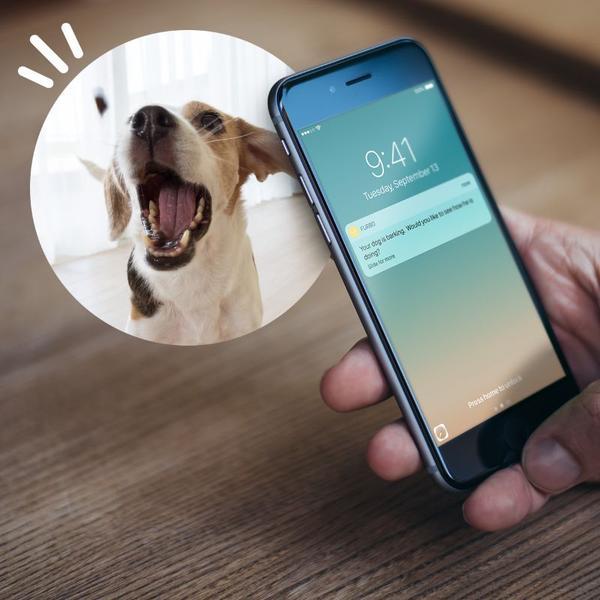 furbo la mejor camara de vigilancia para mascotas del 2018-chollos amazon