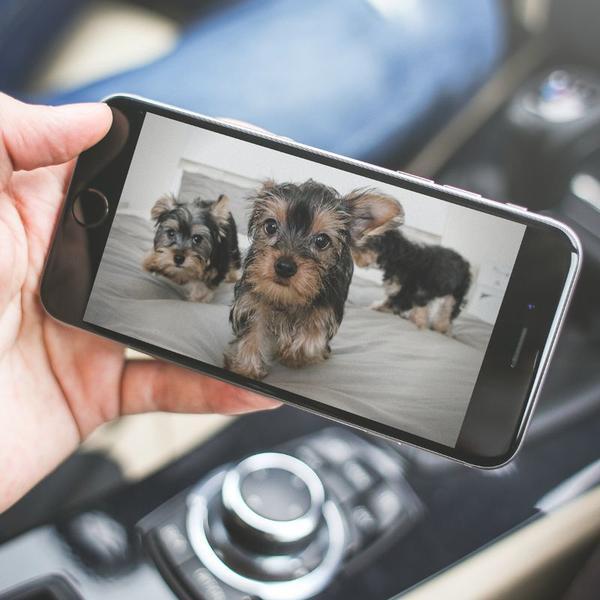 furbo la mejor camara de vigilancia para perros del 2018-ofertas amazon-vision de dia