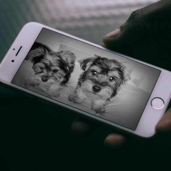 furbo la mejor camara de vigilancia para perros del 2018-ofertas amazon-vision nocturna